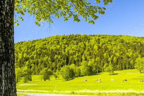 Staande foto Lente Saftig grüne Wiese, Slowenien, Nordslowenien