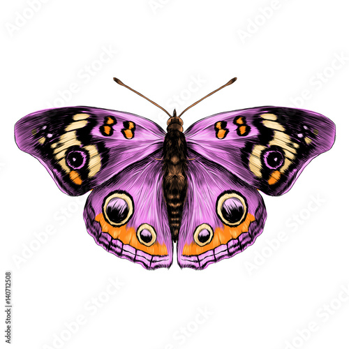 Fototapeta butterfly with open wings top view of symmetry, sketch the graph of vector color drawing butterfly with pink wings