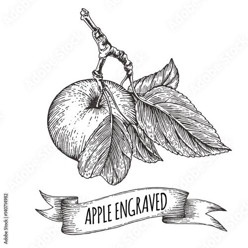 galaz-z-jablkiem-i-napisem-szkic