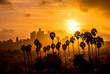 canvas print picture - Los Angeles and Palm Trees Sunset