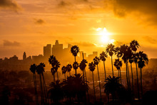 Los Angeles And Palm Trees Sun...