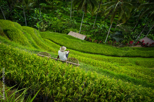 Garden Poster Rice fields Rice terrace worker with baskets - Tegallalang, Bali