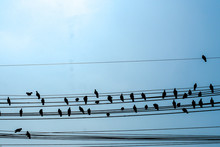 Pigeons Sitting On Wires, Flying