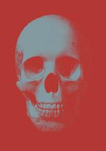 Gray Engraving Skull Front Vie...