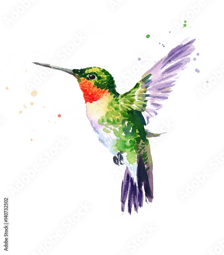 Fototapeta Watercolor Bird Hummingbird Flying Hand Drawn Summer Garden Illustration isolate
