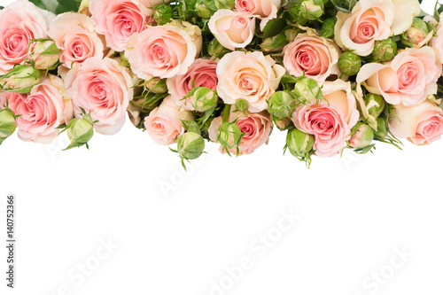 Wall Murals Floral Pink fresh roses with buds border isolated on white background