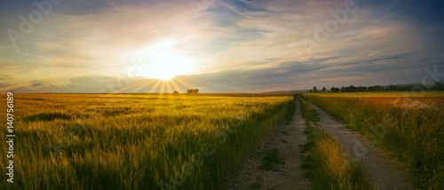 Ingelijste posters Platteland Panoramic view of the sunset at the field of wheat