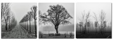 Triptych - Trees In Morning Fo...