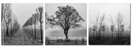 triptych - trees in morning fog - monochrom Canvas Print