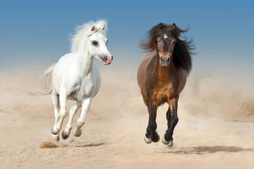 Two beautiful pony run fast in desert dust