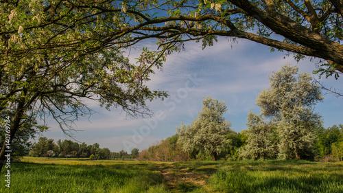 Foto op Plexiglas Landschappen Amazing beautiful spring landscape