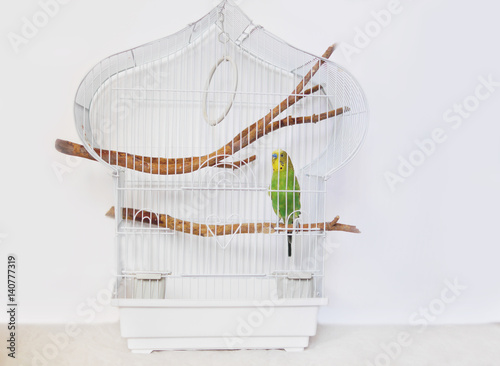 Fotografie, Obraz  White cage with a bird on a white background