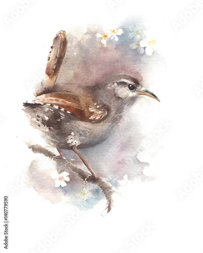 Carta da parati Bird wren watercolor painting illustration isolated on white background