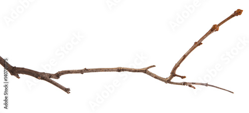 Dry lilac branches isolated on white background Fototapet
