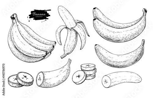 Foto Banana set vector drawing