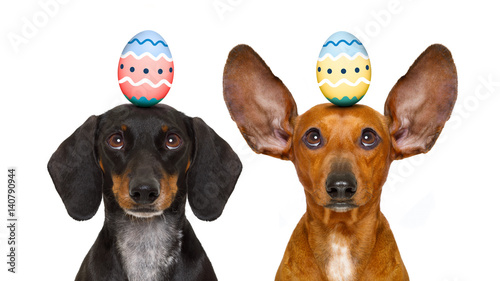 Aluminium Prints Crazy dog easter bunny dogs with egg