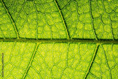 In de dag Macrofotografie Background image of fresh green leaves.