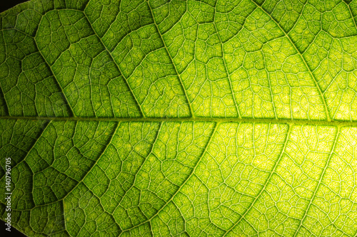 Background image of fresh green leaves. #140796705