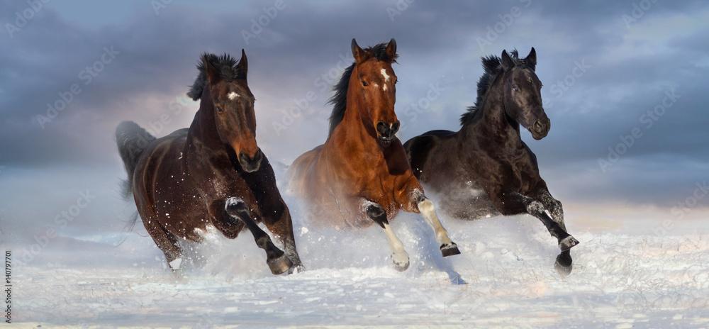 Fototapety, obrazy: Horse herd run gallop in snow winter field against beautiful sky