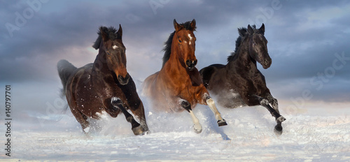 Horse herd run gallop in snow winter field against beautiful sky