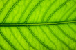 Background image of fresh green leaves.
