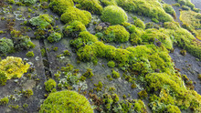 Close Up Of Moss On Roof Tiles