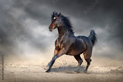 ciemnobrazowy-kon-biegajacy-po-piachu-na-tle-pochmurnego-nieba
