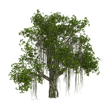 3D Rendering Banyan Tree On Wh...