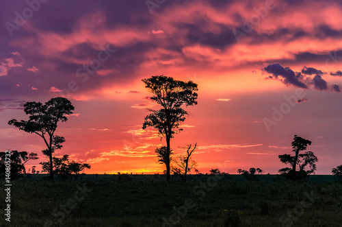 Deurstickers Koraal Wonderful colorful sunset on countryside