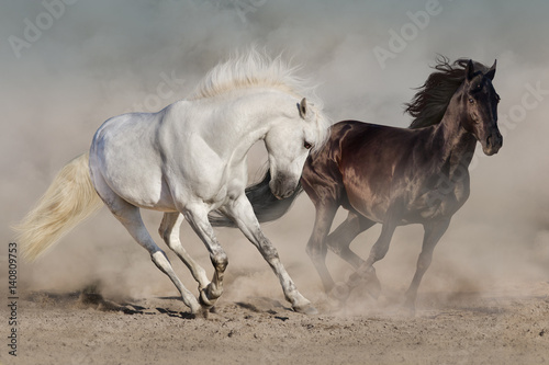 Valokuvatapetti White and black horses run gallop in dust