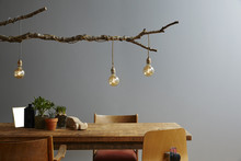 Modern Interior Wooden Furniture And Design Lamp Branch And Bulbs