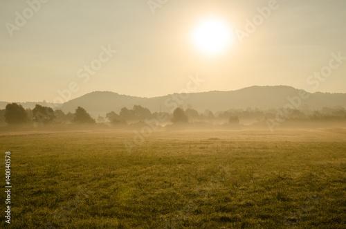 Poster Landschap Golden field in morning sun