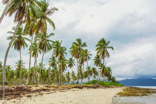 Stickers pour porte Pierre, Sable Tropical beach with high palm trees, sand and seaweed on background of grey sky with clouds. Caribbean storm