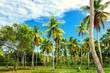 Tropical garden with palm trees. Samana, Dominican Republic. Nature wallpaper