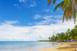 Ideal place for vacation. Tropical sandy beach with a tilted palm tree