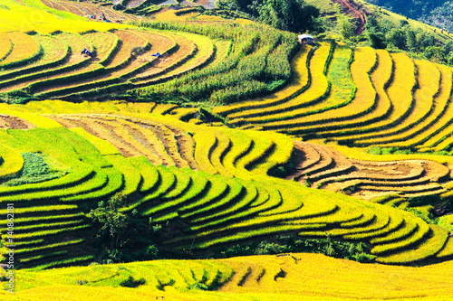 Foto op Plexiglas Geel Terraced rice fields in Vietnam