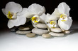 white orchids and pearls lie on the rocks