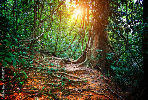 Plakat jungla in borneo