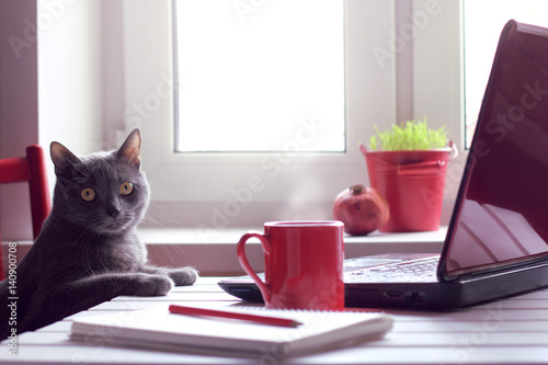 Poster de jardin Chat tired of working make the coffee break/ Pensive cat sitting at the table with laptop and red cup