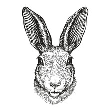 Hand-drawn Portrait Of Rabbit. Easter Bunny, Sketch. Vector Illustration