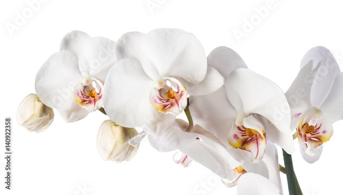 Foto op Plexiglas Orchidee White orchid isolated