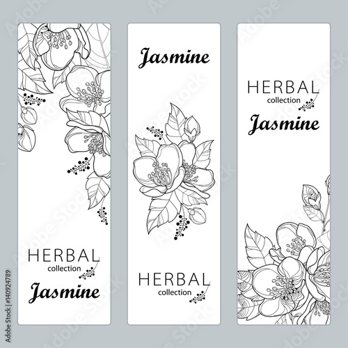 Canvas Print Vector vertical templates with outline Jasmine flowers, bud and leaves isolated on white background