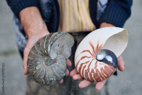 Photo ammonite ancient archaeologist in the hands of the scientist, the concept of the