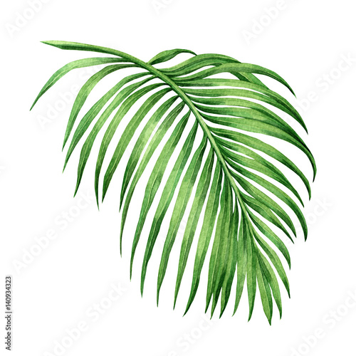 Watercolor painting palm leaf, green leave isolated on white background. Watercolor hand painted illustration. .coconut leaf pattern ,wallpaper ,textile, With clipping path