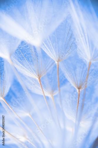 abstrakcjonistyczna-makro-fotografia-rosliien-ziarna-przy-rankiem