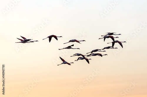 Photo  A flock of flamingos flying over the coast of the ocean in the sunset - Namibia,