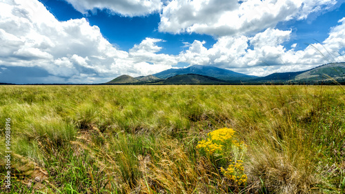 mountain-meadows