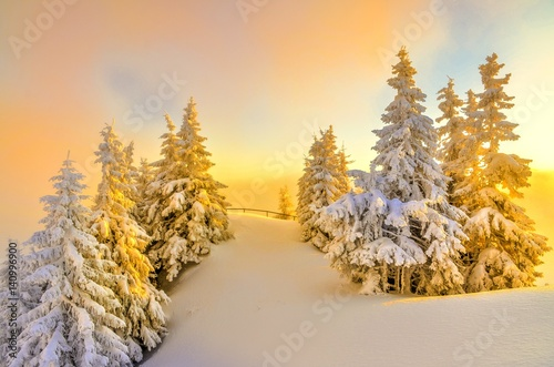 Fotografia  The golden trees on top a mountains Postavaru in winter season, Poiana Brasov, Romania