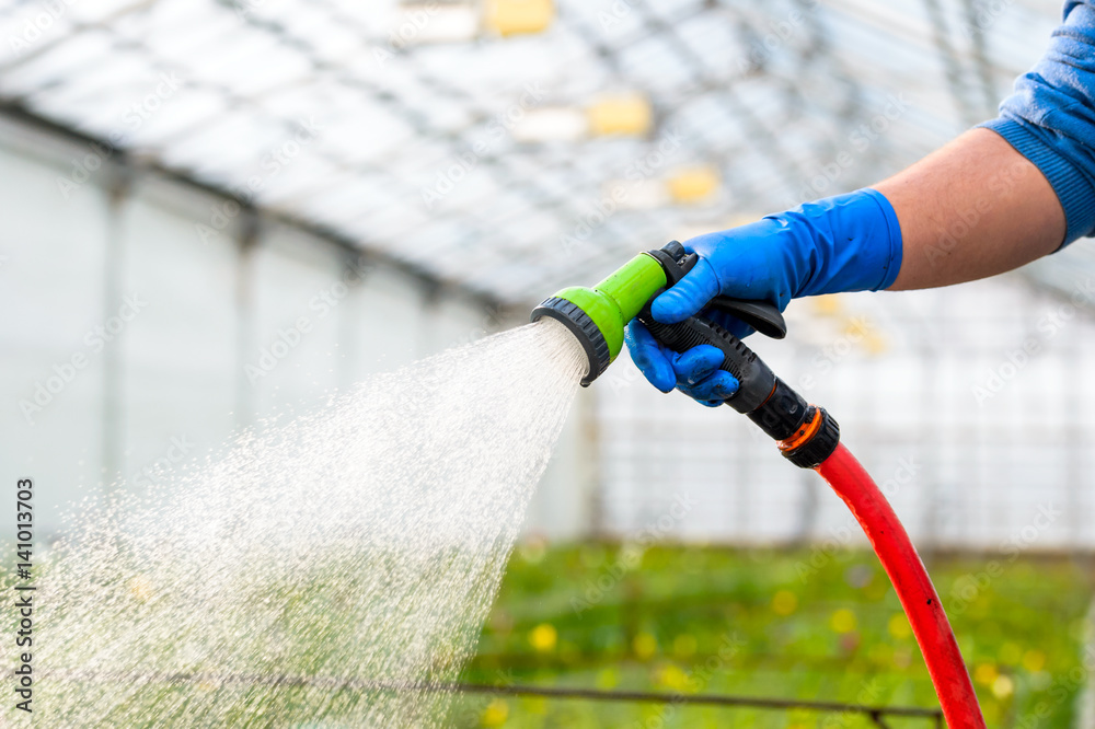 Fototapety, obrazy: Hand watering flowers in the greenhouse
