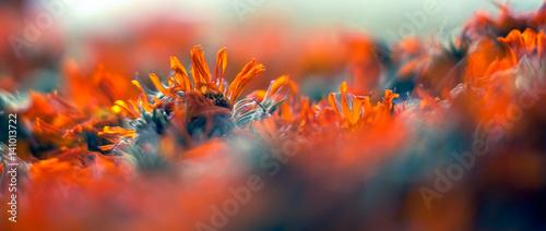 In de dag Macrofotografie Dried flowers
